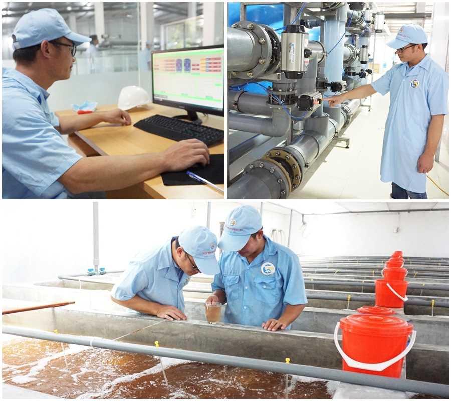 Khu phức hợp sản xuất tôm giống chất lượng cao tại xã Tân Lập, huyện Đầm Hà.